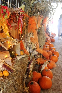 White Oak Pumpkin Patch